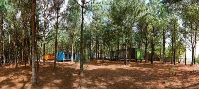 Khu rừng thông bên hồ Đại Lải từ lâu là điểm đến hot ở Phúc Yên, Vĩnh Phúc, cách Hà Nội khoảng 45 km. Tại đây thường diễn ra các hoạt động giải trí, cắm trại cho các gia đình vào cuối tuần. Thời gian này, du khách đến đây sẽ được khám phá không gian nghệ thuật nằm ngay dưới rừng thông.