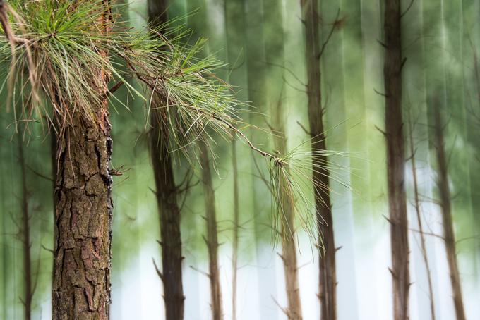 Bằng nghệ thuật vẽ 3D phối với khung cảnh thực, container trưng bày này như chìm giữa khu rừng. Đây là tác phẩm