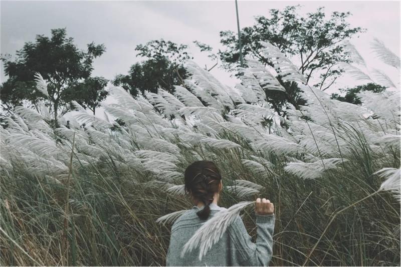 Cỏ lau không rực rỡ như hoa cải, cũng không mảnh mai dịu dàng như cúc họa mi mà chỉ mang màu trắng bàng bạc. Nhưng chính cái màu ảm đảm này lại cực kì hợp với những ngày đầu đông chỉ có gió nhẹ và cái nắng hanh hao. (Ảnh: We25)