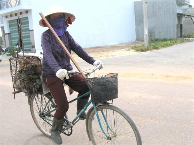 Hàng ngày, bà Hồng đạp xe cả trăm cây số đi mua chó rong