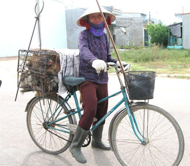 Bà Hồng luôn mua được nhiều chó