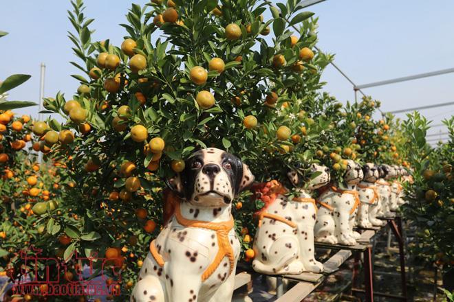 Năm nay, mẫu quất bonsai trồng trên lưng những chú chó, ăn theo biểu tượng của năm Mậu Tuất 2018 được nhiều chủ vườn đầu tư.