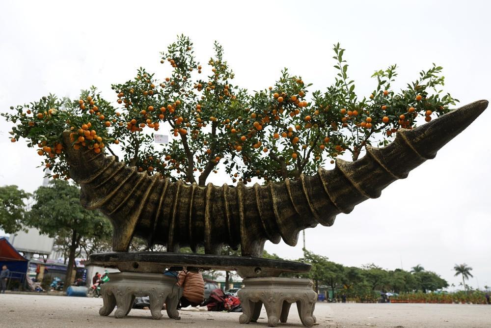 Các chậu quất được tạo hình từ cốt thép sau đó đắp xi măng bên ngoài để tạo hình. Trong ảnh: Một chậu quất cảnh có giá 40 triệu đồng mang hình ốc biển khổng lồ.
