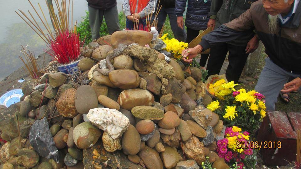 Hai con rắn nước leo lên ngôi mộ vô danh nằm nhiều ngày nay (Ảnh: CTV Hoàng Minh Đức)
