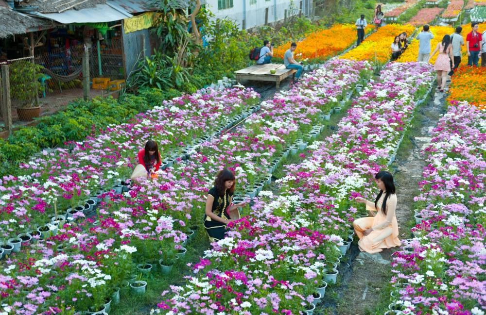 Làng hoa Mê Linh - một địa điểm không thể bỏ qua khi đến Vĩnh Phúc. (Ảnh: diemthamquan.com)