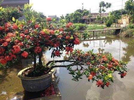 Một chậu hoa mẫu đơn soi bóng bên bờ sông