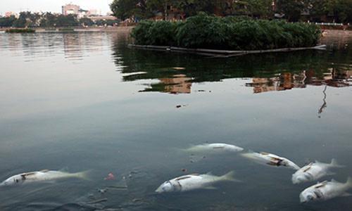 Cá nổi chết ở hồ Hoàng Cầu (Đống Đa, Hà Nội) vào ngày 29/5.