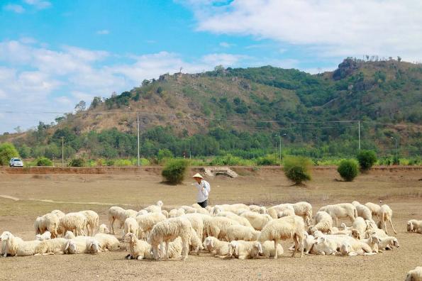 Kết quả hình ảnh cho hình ảnh đàn cừu khát nước