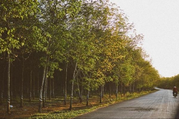 Con đường đi Hồ Cốc  Vũng Tàu rợp bóng cây xanh. (Nguồn: Internet)
