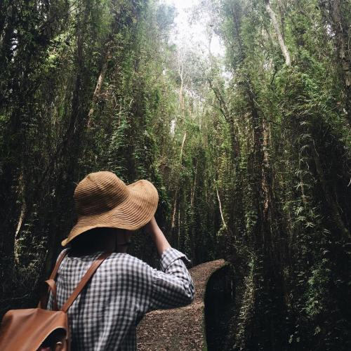 Sự tĩnh mịch khu rừng sẽ làm bạn vô cùng thích thú. (Nguồn: lizliemai)