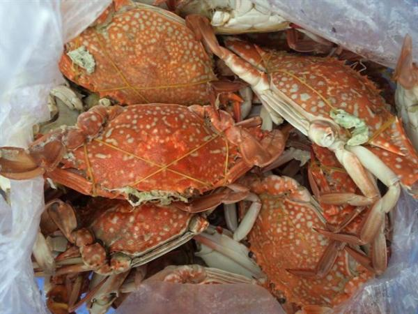 Đến Vũng Tàu đừng bỏ qua những món ngon hải sản của vùng biển này nhé! (Nguồn: Hoàng Quyên)