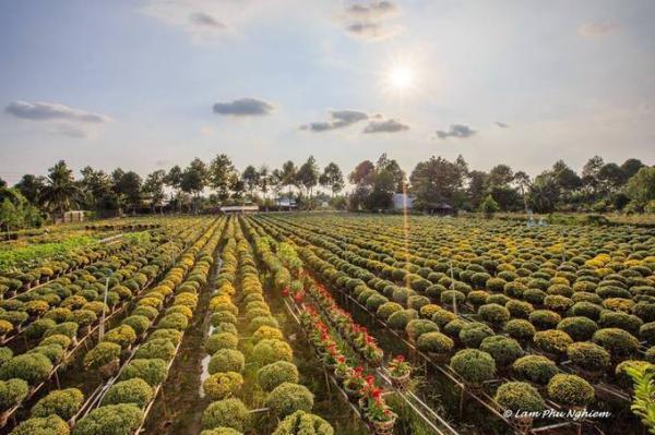 Để cảm nhận không khí mùa xuân điển hình ở miền Tây, Sa Đéc, Đồng Tháp là điểm đến không thể bỏ qua với làng hoa Tân Quy Đông nổi tiếng. Ở đây có đa dạng loài hoa, từ hồng, cúc, thược dược, mâm xôi đến dạ yến thảo, mãn đình hồng, lan hồ điệp... Ngoài ngắm và chụp ảnh, du khách có thể trò chuyện với người dân về cách giữ hoa tươi lâu và mua hoa về trang trí. Ảnh: Lâm Phú Nghiêm.