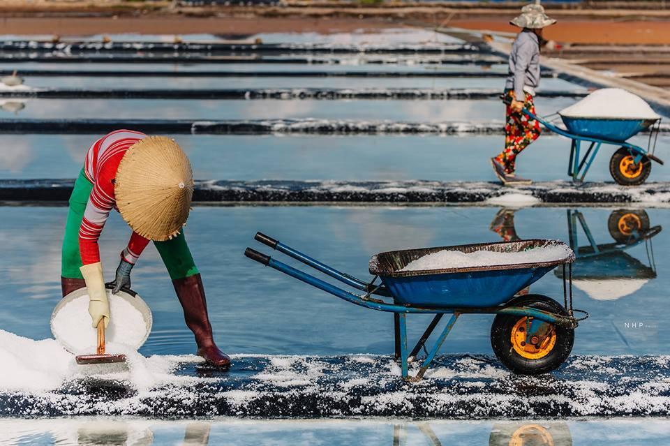Những người diêm dân đang cần mẫn thu hoạch muối về nơi tập kết.