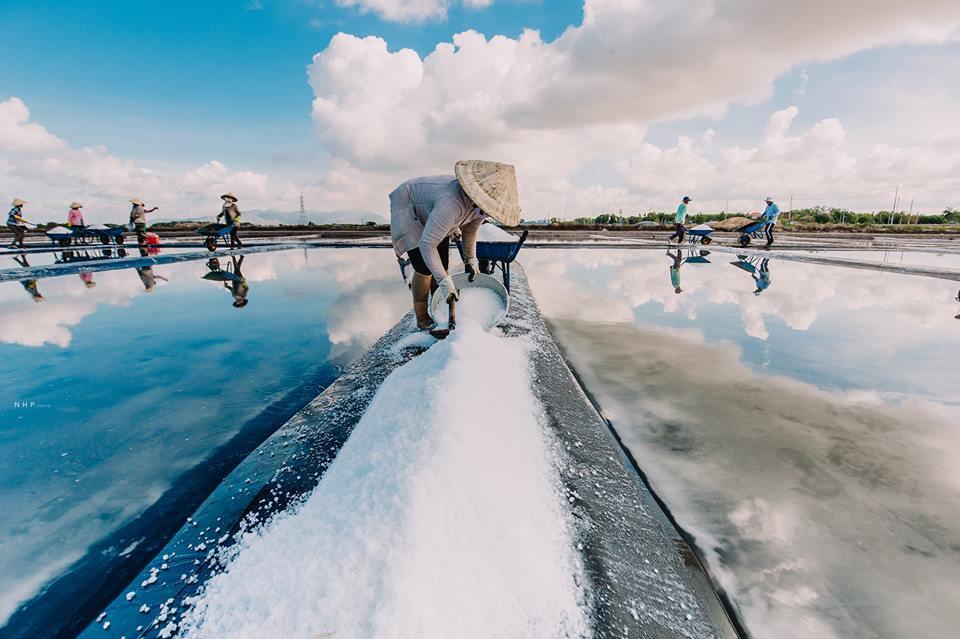 Những ụ muối trắng xóa đang chờ được thu hoạch.