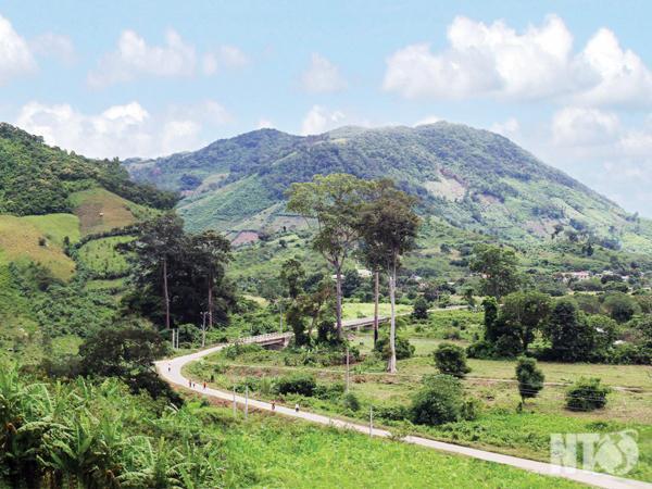 Vẻ đẹp độc đáo của rừng nguyên sinh tại Vườn Quốc gia Phước Bình.