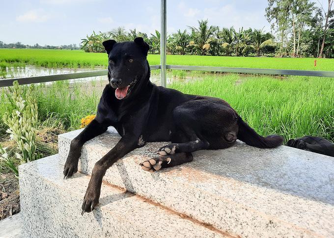 Chú chó nằm bên mộ cậu chủ đã được gia đình xây mái che nắng, che mưa. Ảnh Diệp Phan.
