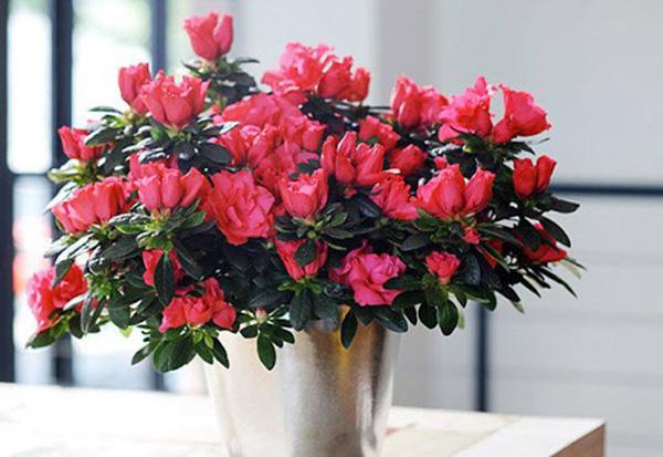 Không nên dùng lại cây, hoa trang trí trong nhà của chủ cũ - Ảnh: Minh họa