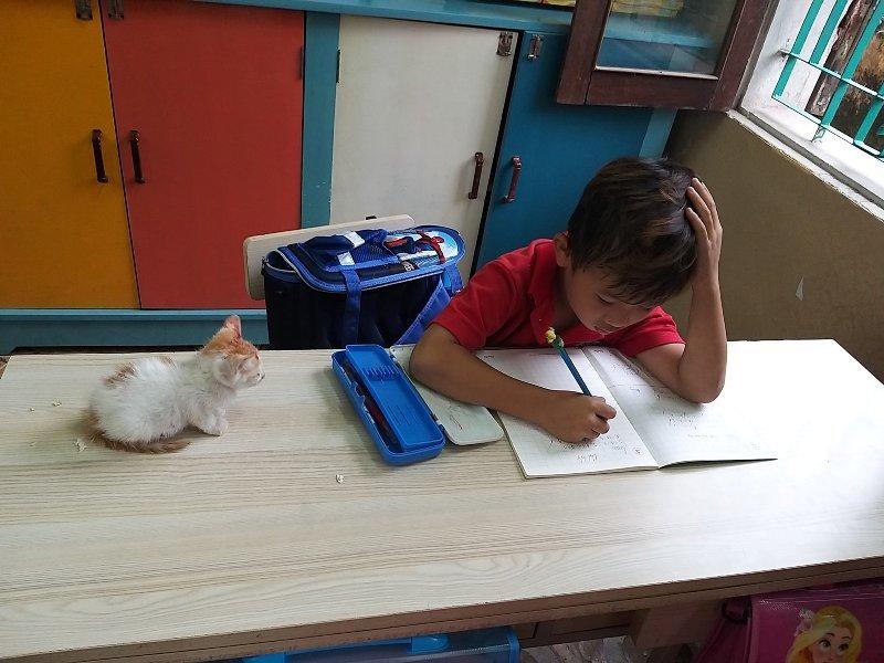 Mèo con ngoan ngoãn chờ Kỳ Phong học bài.