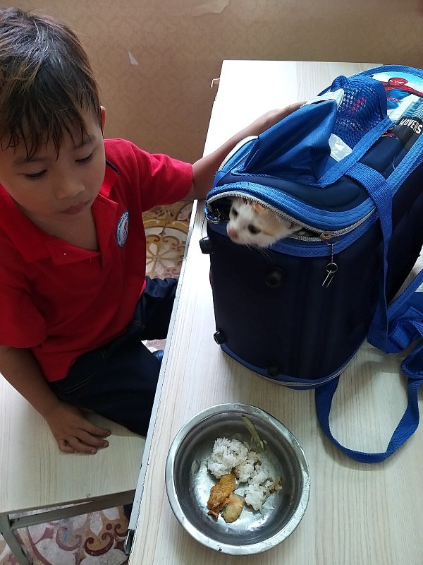Trần Kỳ Phong và mèo cưng nhận được món quà đặc biệt của cô giáo chủ nhiệm.
