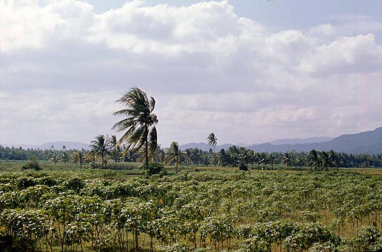 Khung cảnh nông thôn gần Quy Nhơn. Ảnh: James Speed Hensinger.