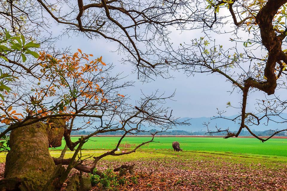 Lá rụng vàng cả mặt đất